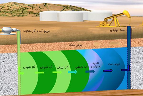 چگونه یک گیاه تبدیل به نفت می شود